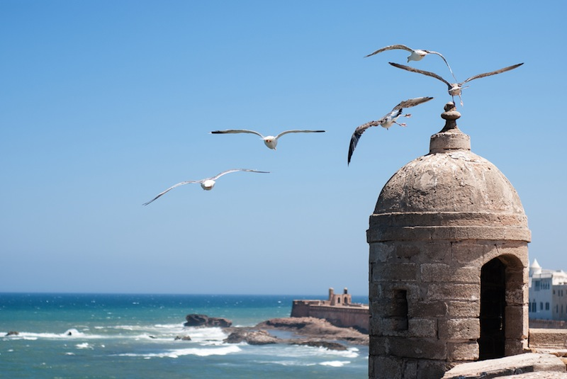 Lot of seagulls flying over Essaouira fort