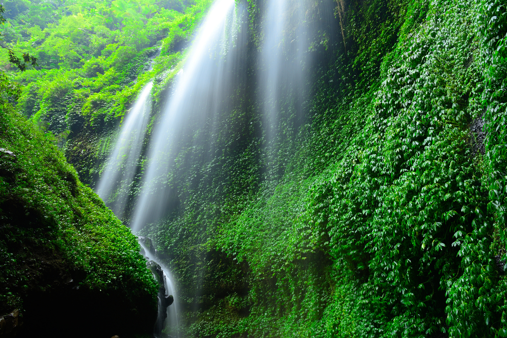 Madakaripura Waterfall Deep Forest Waterfall in East Java Indonesia 9