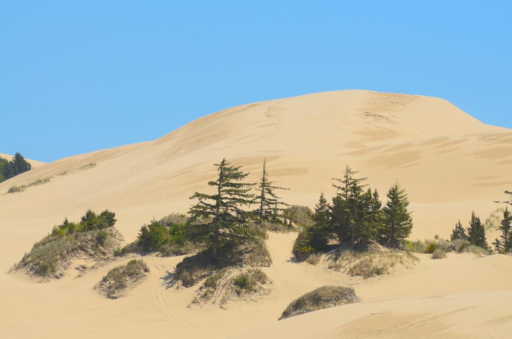 Oregon coast dunes near Reedsport Oregon 1