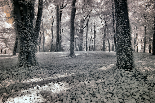 Park in Poznan Greater Poland Poland