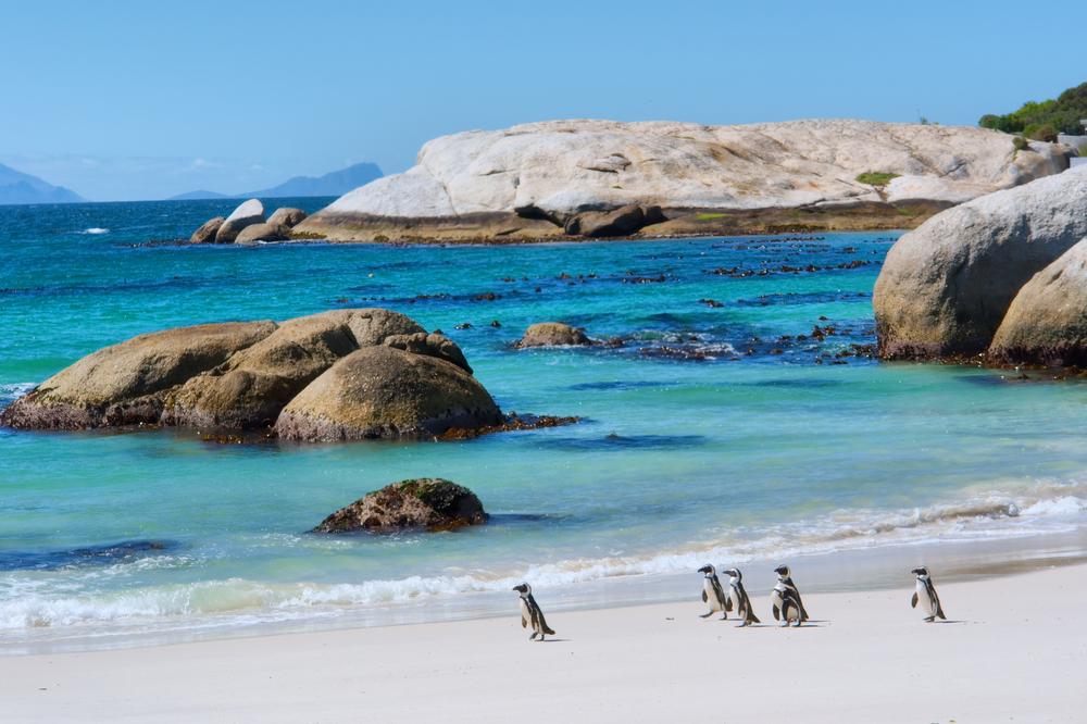 Penguins walk on sunny beach