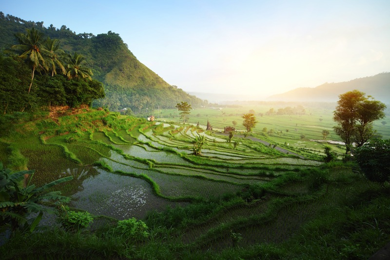 Rice tarrace in mountains