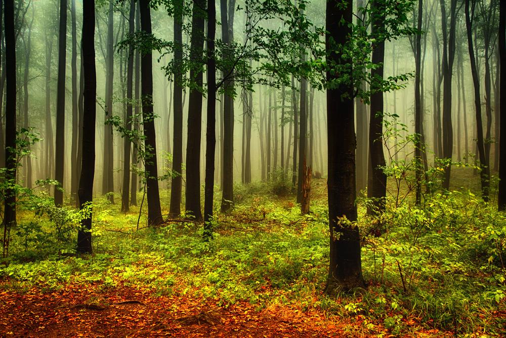 Robin Hood Il segreto della foresta di Sherwood cornovaglia