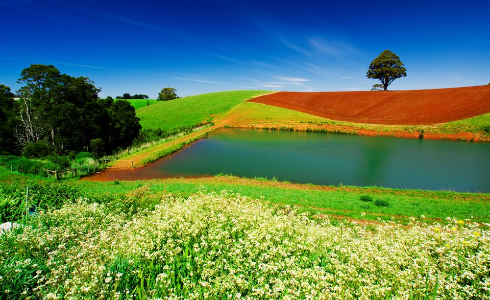 Rural field in Tasmania Australia