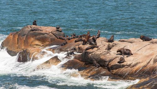 Sea lions in Cabo Polonio Uruguay