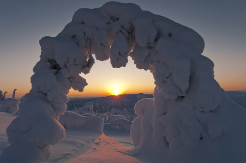 Snow covered Spruce Stubba Naturreservat World Heritage Laponia Lappland Sweden