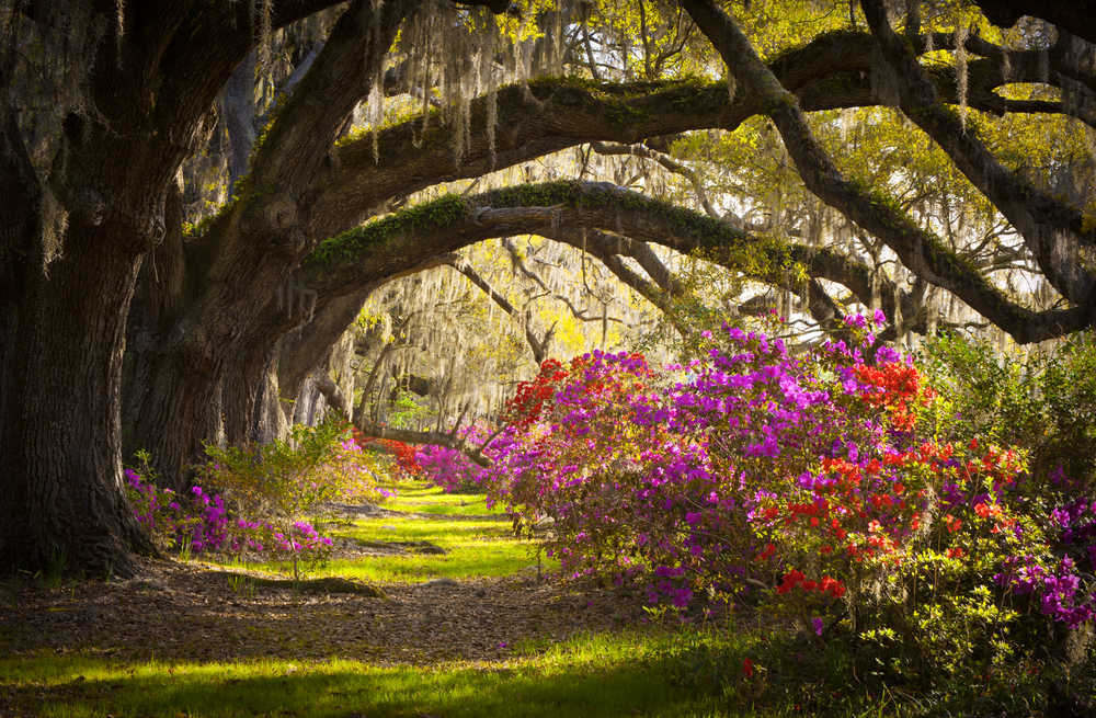 South Carolina charleston