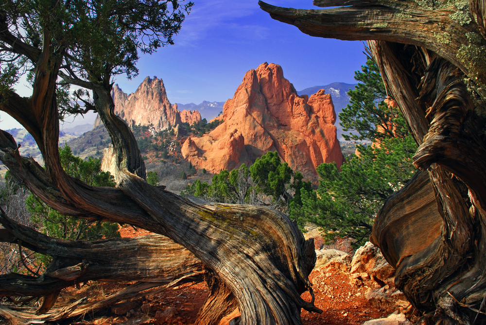 South Gateway Rock formation framed by twisted Juniper Trees at the Garden of the Gods Park in Colorado Springs Colorado