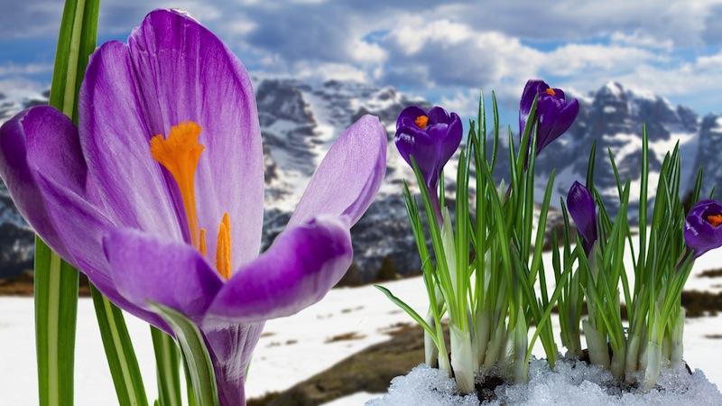 Springtime in Dolomites mountain Italian Alps Stock Photo