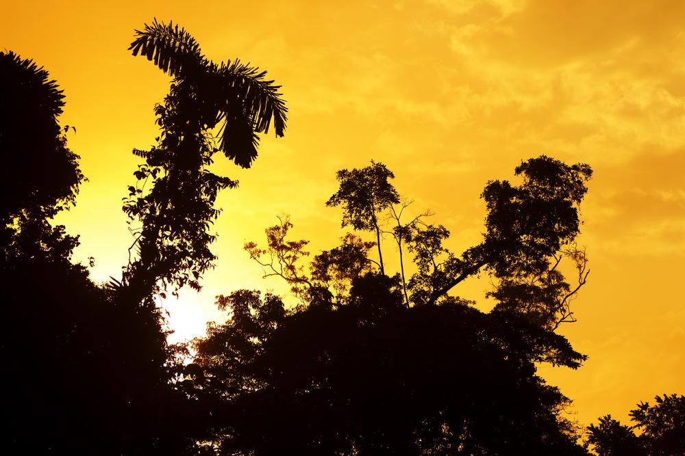 Sunrise over the Amazonian jungle venezuela