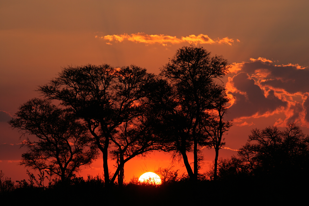 Sunset with silhouetted African savanna trees Kruger National park South Africa