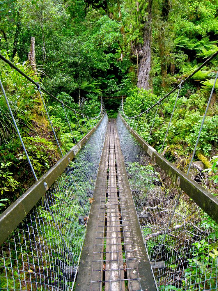 Swing Bridge in New Zealand Forest