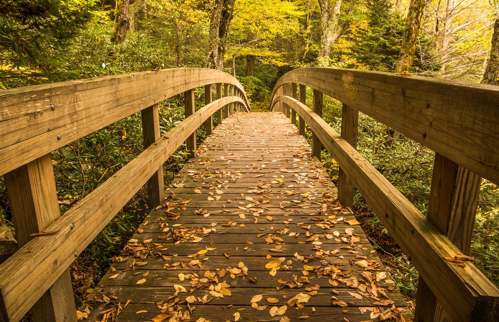 Tanawha trail bridge in the Autumn landscape of the Blue Ridge Mountains near Blowing Rock North Carolina
