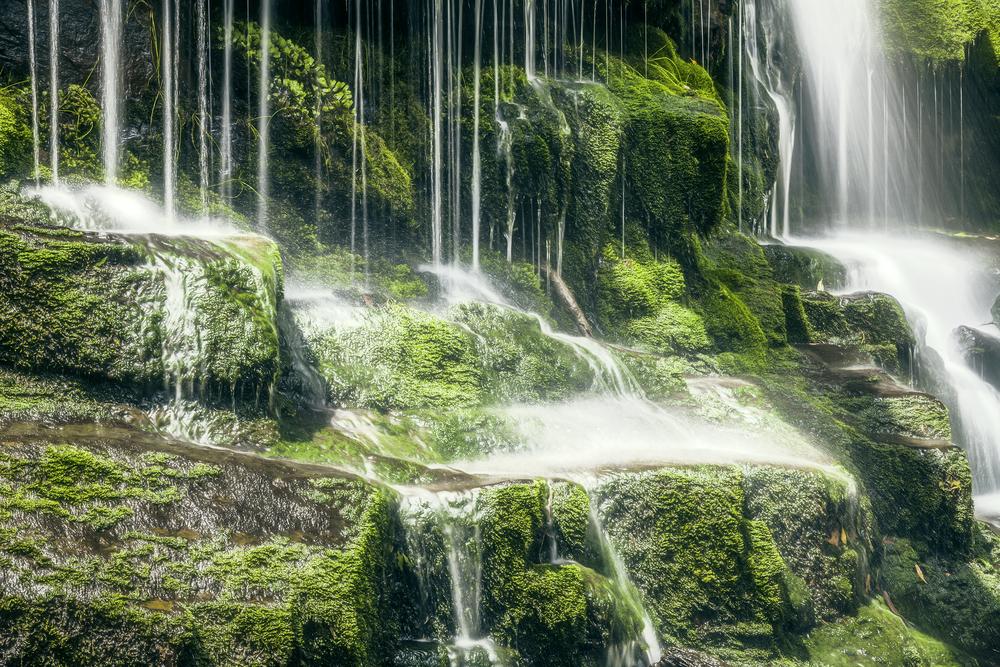 Tasmanian Waterfall 6