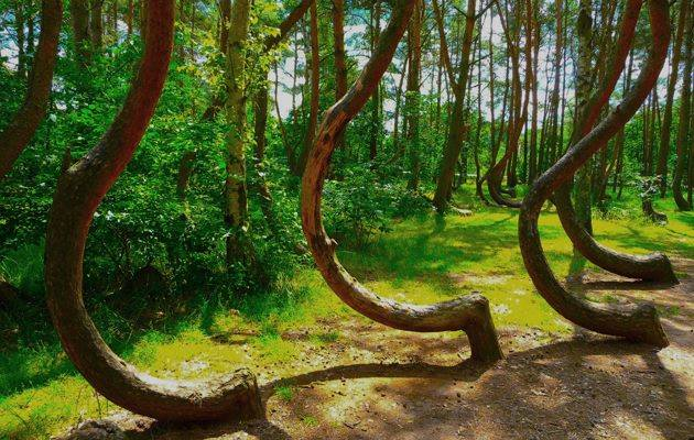 The Crooked Forest Poland
