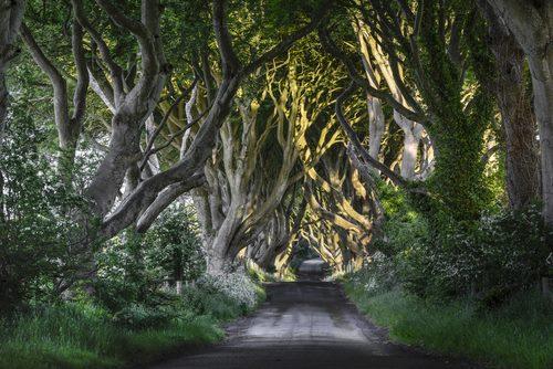 The Dak Hedges Antrim Ireland irlanda