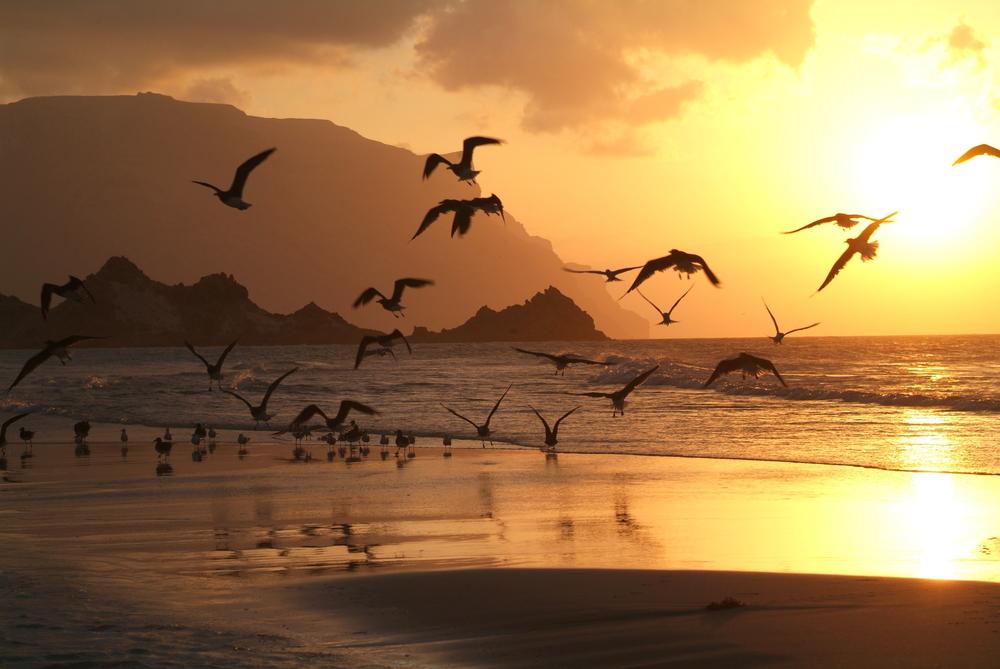 The beach of Qalansiya on Socotra island Yemen