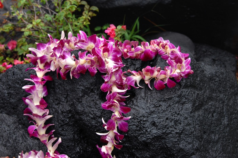 Tourist leaves token offering of orchid lei on black lava stone