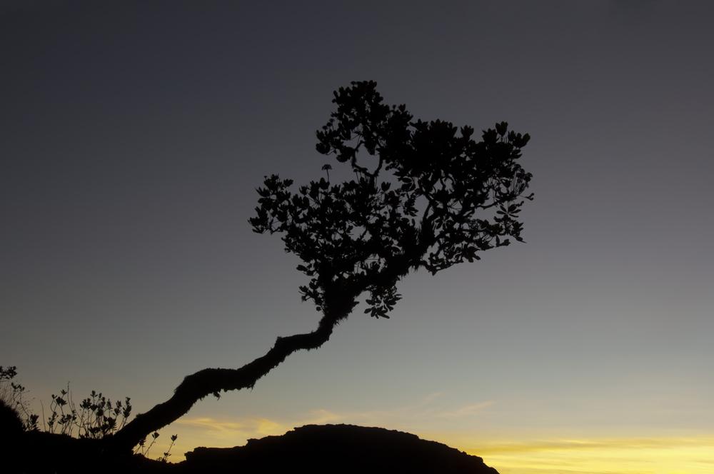 Tree the top of Roraima plateau