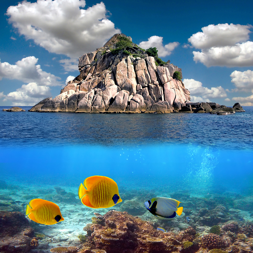 Tropical paradise and corals on a reef top Koh Tao island Thaila
