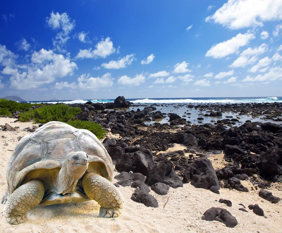 Turtle Bay Mauritius