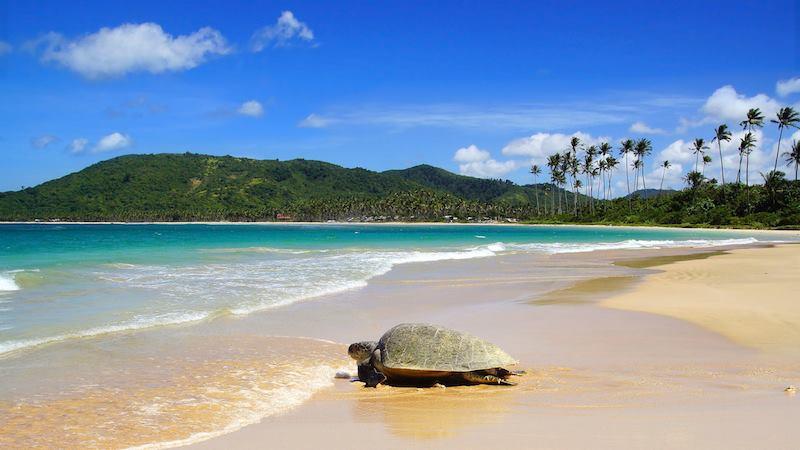 Turtle Beach Playa Grande Costa Rica
