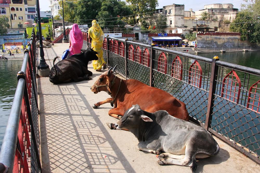 Udaipur Rajasthan India