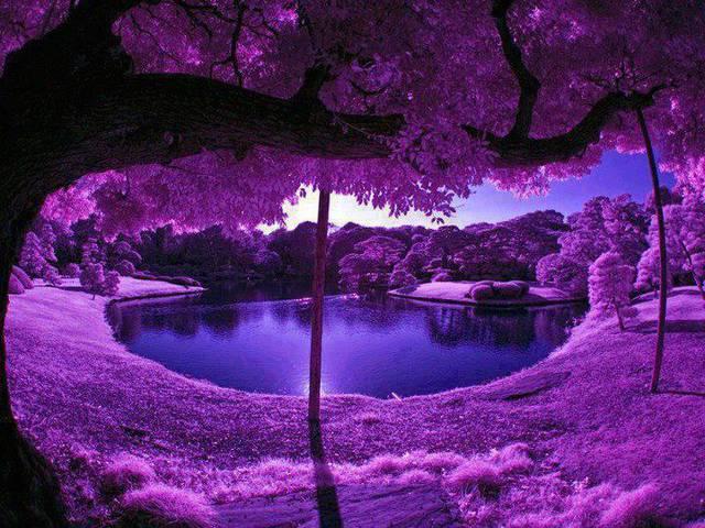 Un omaggio floreale per voi Giardini di Kyoto Giappone