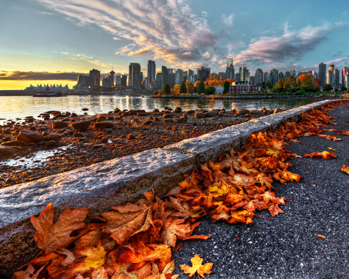 Vancouver downtown fallen leaves from seawall in October