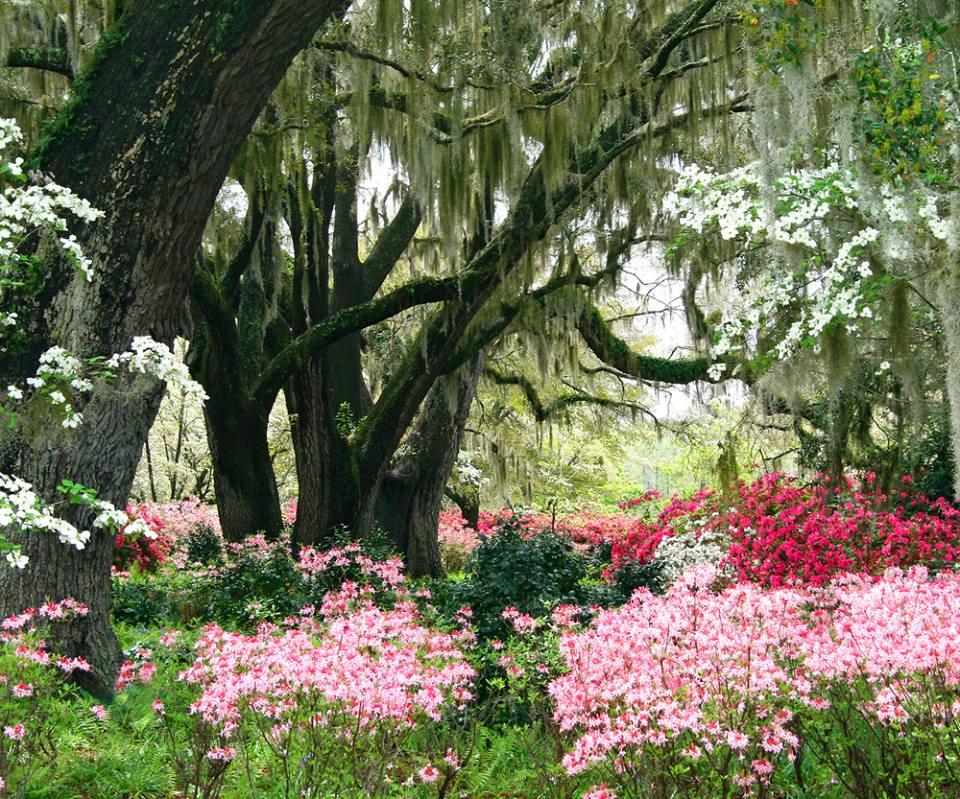 White Point Gardens Charleston South Carolina72_n