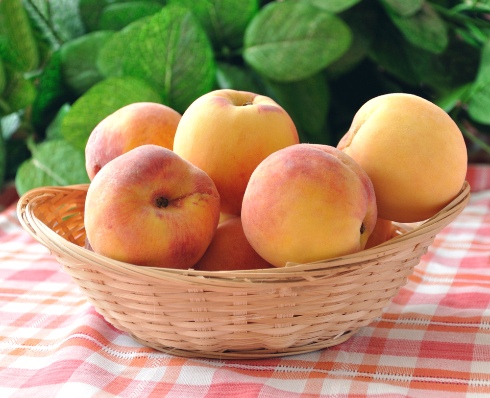 With peaches in a wicker basket on the tablecloth on a background of foliage