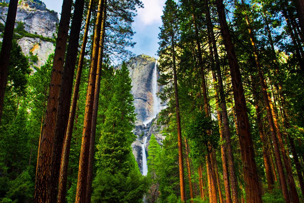 Yosemite Waterfalls behind Sequoias in Yosemite National ParkCalifornia