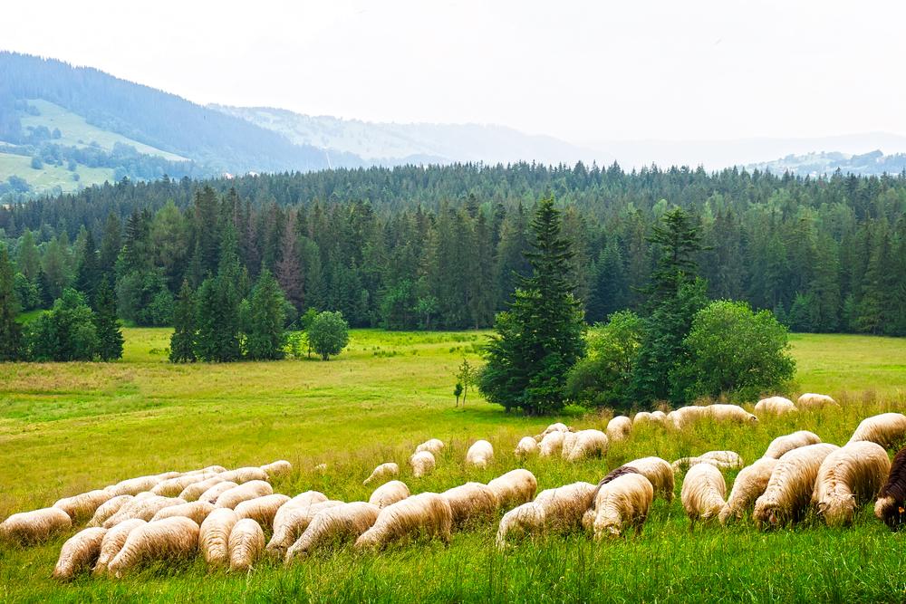 Zakopane Mountains Poland