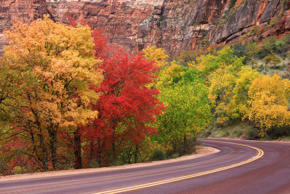 Zion National Park Colorful fall foliage and winding road gran Canyon