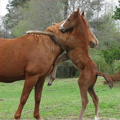 abbraccio cavalli