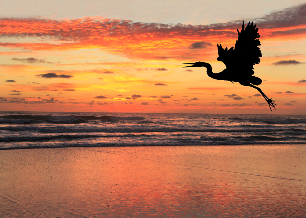 airone tramonto