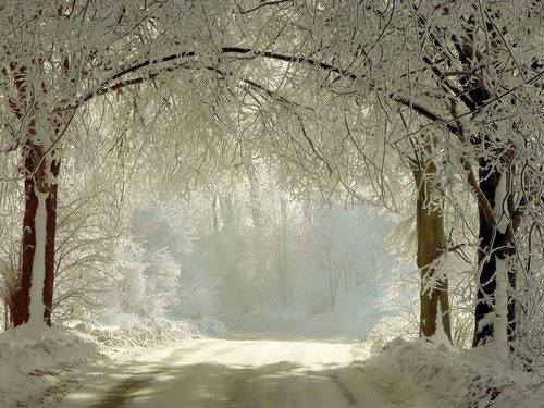 alberi neve sentiero