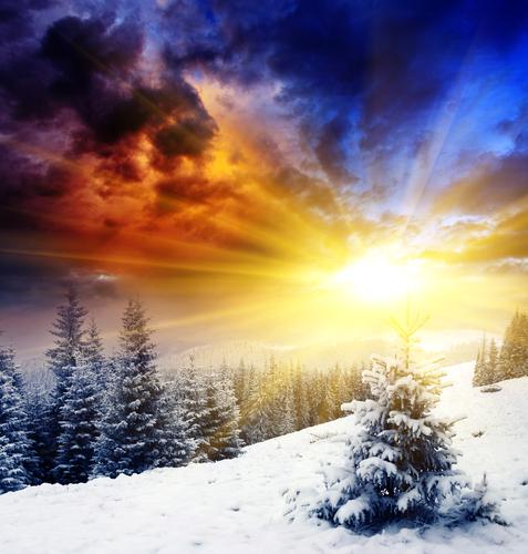 alberi neve