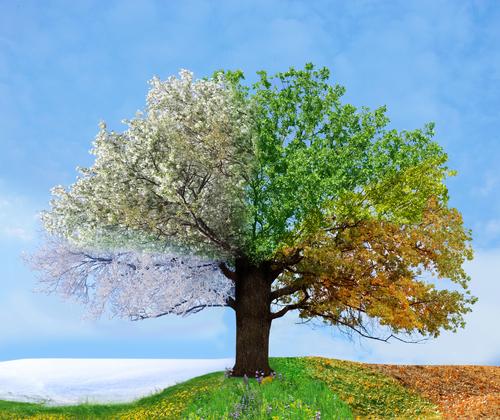 albero a colori