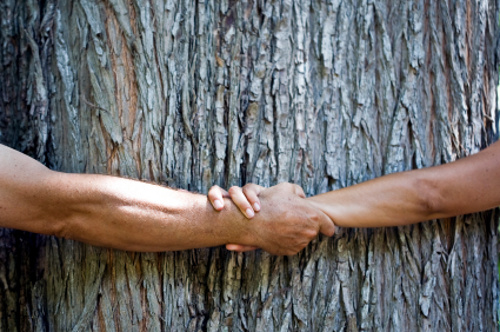 albero abbraccio