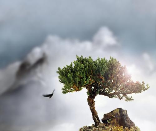 albero aquila mongolia