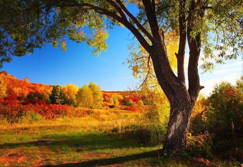 albero colorado