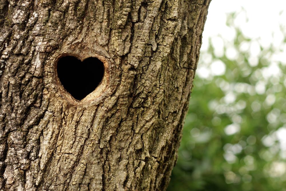 albero cuore 2