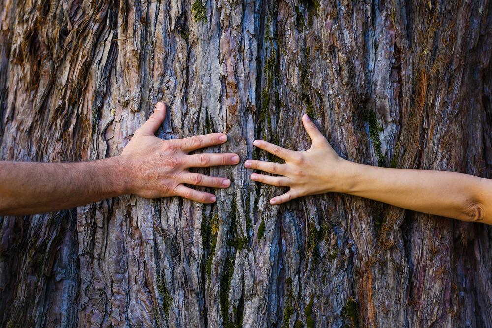 albero mani