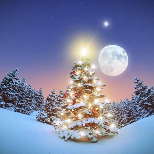albero natale luna