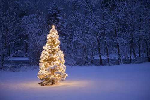 albero neve natal