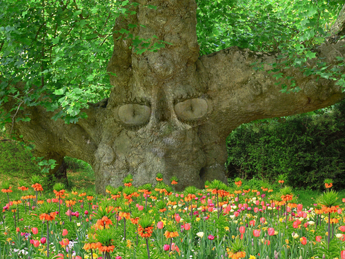 albero occhi