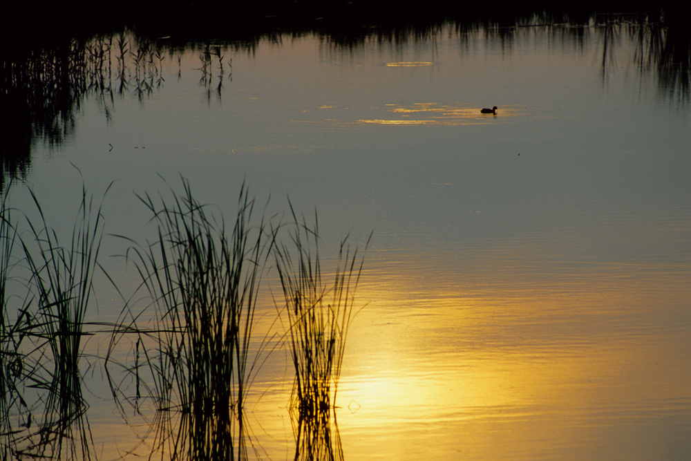 anaro River Regional Park nature reserve bucket rubiera Modena Emilia Romagna