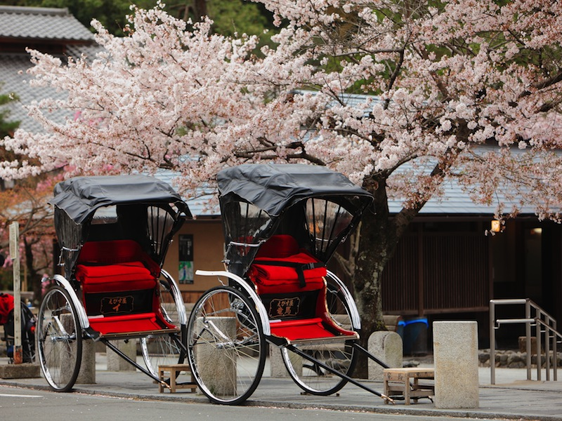 apan ricksha with cherry blossoms tree 5