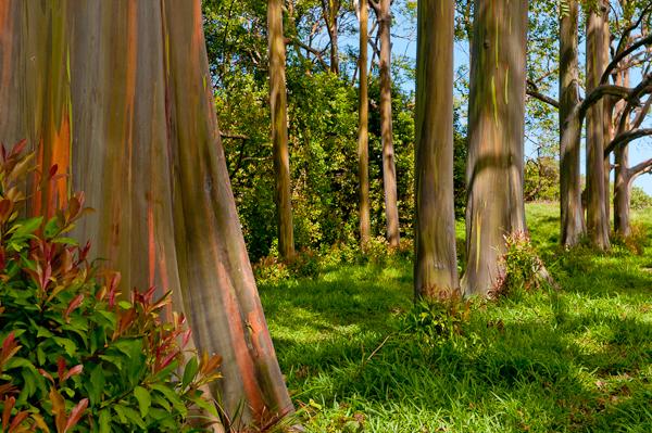 arcobaleno alberihawaii